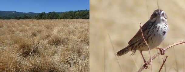 Aguierre-sm-sparrow-610x250