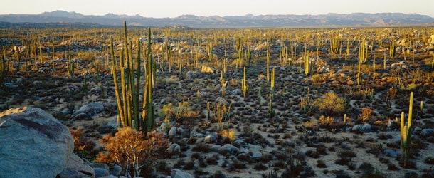 Baja California Sur Desierto Baja California Sur y Las