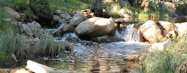 turkey-creek-s-wethington-610x250