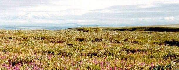 arctic-nwr-usfws-610x250