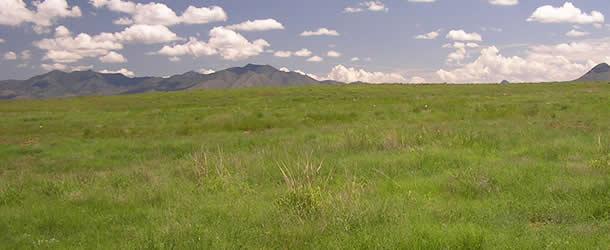610x250-grasslands
