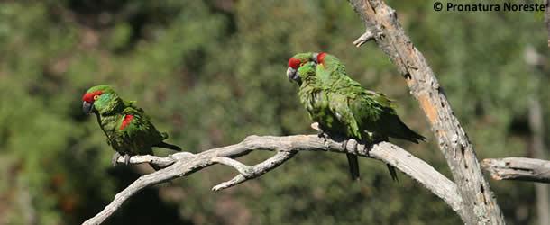 610x250-parrots