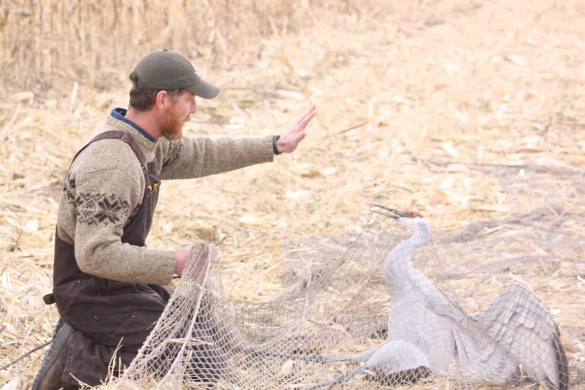 Movements of Sandhill Cranes - Sonoran Joint Venture