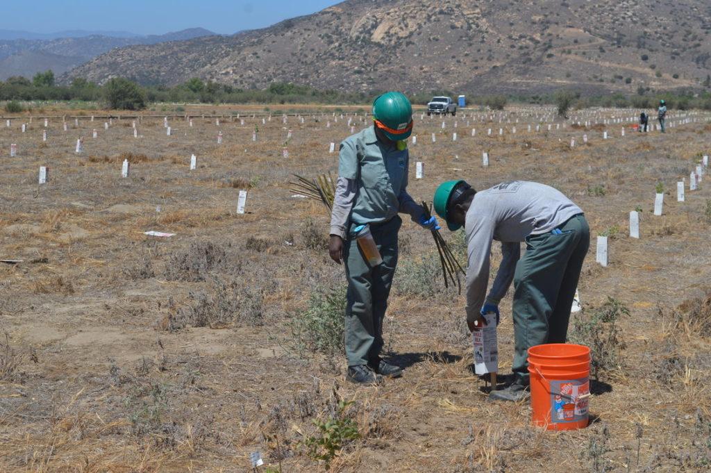 san dieguito river riparian restoration project